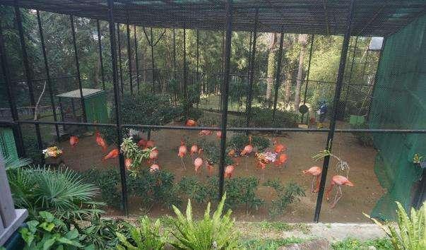 Зоологічний і ботанічний сади Гонконгу