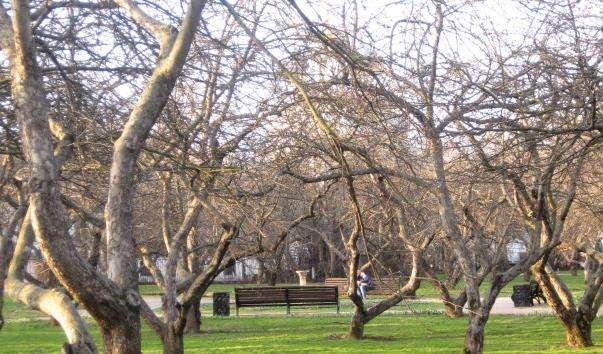 Дьяковский сад в Коломенському
