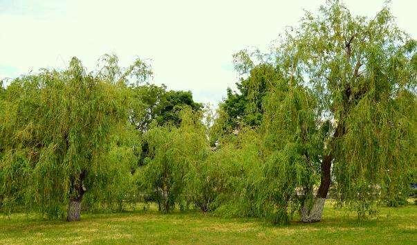 Парк імені міста Плевен