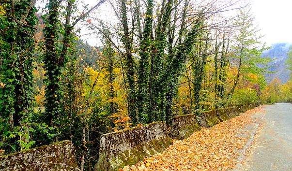 Ріцинський реліктовий національний парк