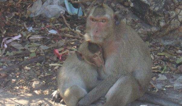 Гора мавп Khao Sam Muk