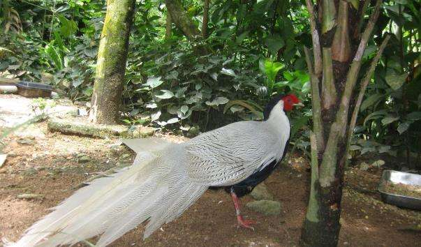 Джуронг Парк Птахів