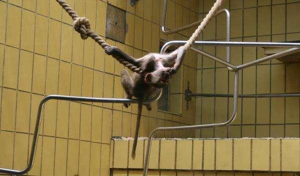 Франкфуртський зоопарк