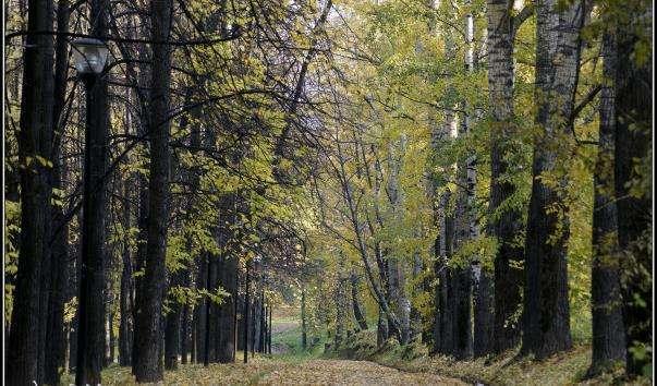 Олександрівський сад