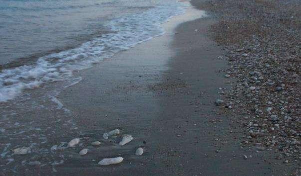 Пляж Skala