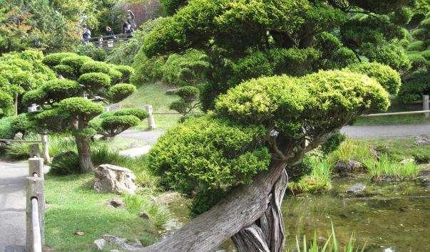 Чайний сад