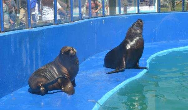 Дельфінарій в Коста Дуарада